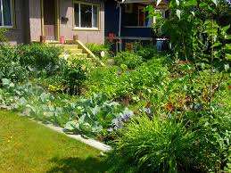 Front Yard Vegetable Garden Ideas Creating A Front Yard Vegetable Garden The Garden