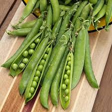 Container Gardening Peas - how to grow peas in containers container garden club