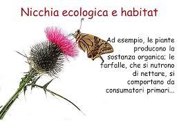 si e habitat l ambiente e l ecologia ppt scaricare
