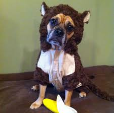 5 happy things animals in halloween costumes edition greatist