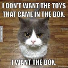 Meme Videos - my weblog watching cat videos is work