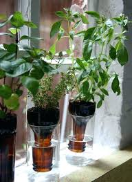 indoor wall herb garden u2013 piccha