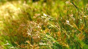 tufts of grass selective focus free stock footage