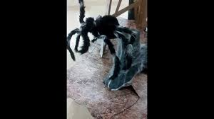 spirit halloween after halloween sale spirit halloween jumping spider animated props youtube