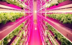 philips led grow light global led agricultural grow lights market 2018 heliospectra ab