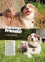 australian shepherd quinn dogs lookin u0027 cute with their best buds modern dog magazine