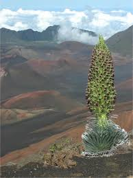 hawaiian plants change threatens spectacular hawaiian plant