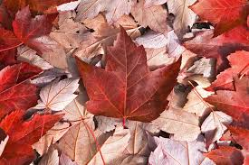 wallpaper canada flag leaves maple cool hd picture image