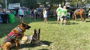 teaching your dog emergency recall we love pets training