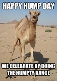 Hump Day Camel Meme - happy hump day holiday fb posts pinterest humor wednesday