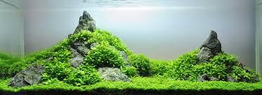 basic aquascaping aquafishinfo com