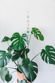 indoor plant guide 5 beginner plants you can u0027t kill indoor