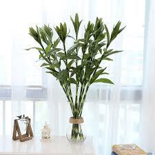 plante verte dans une chambre pastorale artificielle soie fleurs chanceux bambou plante verte