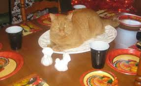 felines taking part in all the thanksgiving meowingtons
