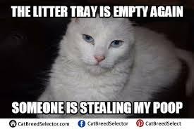 White Meme - white cat memes cat breed selector