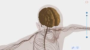 Google Human Anatomy Human Body Anatomy 3d Free Android Apps On Google Play