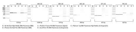 q5 high fidelity dna polymerases neb