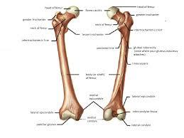 Anatomy Of The Human Body Bones Hip Joint Anatomy Bone And Spine
