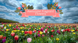 awesome fragrant flowers for your home as decor gifted gardener