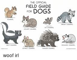Dramatic Squirrel Meme - the official field guide for dogs squirrel sneaky squirrel sky
