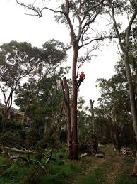 shire tree garden services in sylvania sydney nsw tree