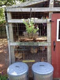 is it hard to raise backyard chickens the kuntry klucker