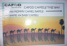 bringing the nativity story to life in reading cafod portsmouth blog