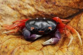 claws halloween halloween crab