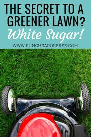 best 10 lawn fertilizer spreader ideas on pinterest grass