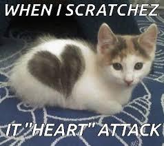 Invisible Cat Memes - invisible cat memes best cat wallpaper 2018