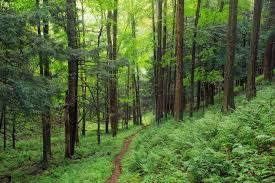 Pennsylvania forest images Interesting photos of susquehannock state forest in pennsylvania jpg