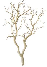 manzanita tree branches sandblasted manzanita centerpiece branches 18 inches blooms
