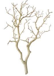 manzanita branches for sale sandblasted manzanita centerpiece branches 18 inches blooms