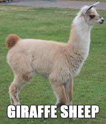 Llama Meme - llama better names for things know your meme