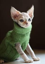 sphynx sweaters sphynx sweaters best sweater 2018