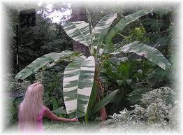 Tropical Plants Pictures - plants