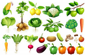 vegetables vectors photos and psd files free download
