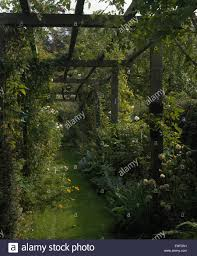 grass path beneath wooden pergola with green climbing plants in