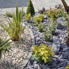 rockery plants top 10 plants for an alpine rock garden alpine