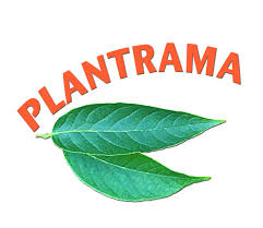 pronouncing plant names and growing herbs indoors plantrama com