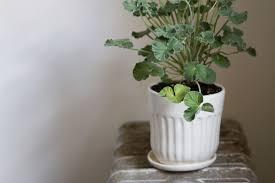 simple stuff planters and pots u2013 reading my tea leaves u2013 slow