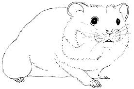 Hamster Animaux  Coloriages à imprimer