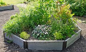 herbal garden herb garden growing herbs gardener s supply