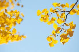 drought resistant trees tree advice tree topics