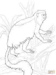 red colobus monkey coloring page free printable coloring pages