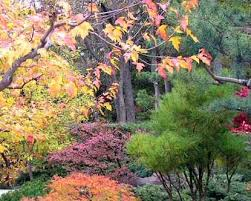 Different Types Of Japanese Gardens - 10 different types of gardens