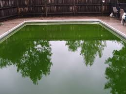 how to safely kill algae in a swimming pool