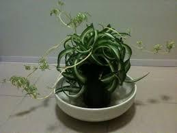 beautiful house plants unusual houseplants download unique house plants michigan home