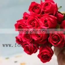 White Roses For Sale A Grade High Quality Fresh Cut Flowers White Roses For Sale