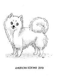 american eskimo dog tattoo 20 best eskimo puppy images on pinterest american eskimo puppy